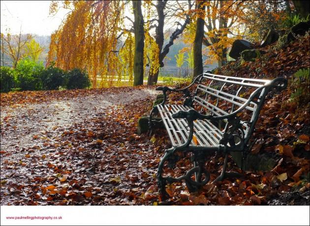 avenham park autumn