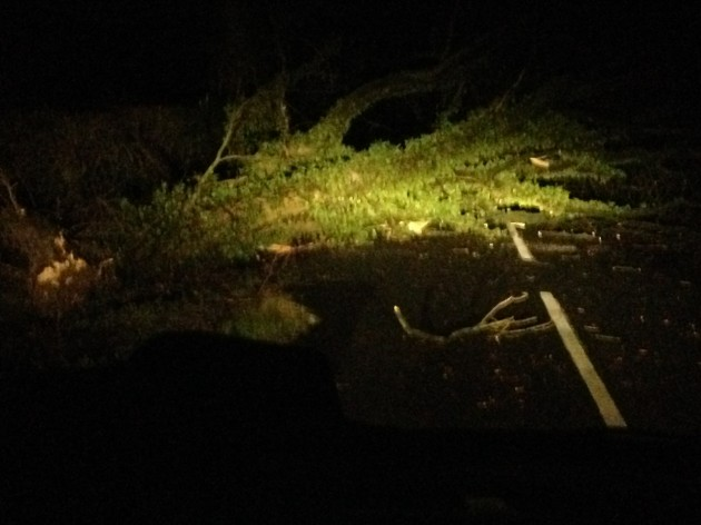 Tree down on Langley Lane off Whittingham Lane
