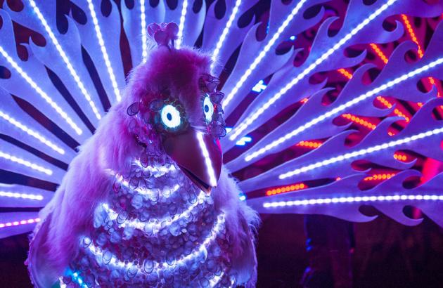 Illuminated peacocks lit up the city centre