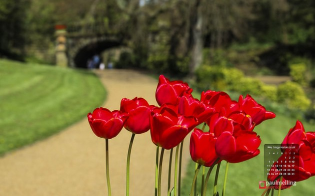 Tulips in Miller Park