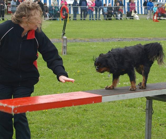Dog Agility Training Preston