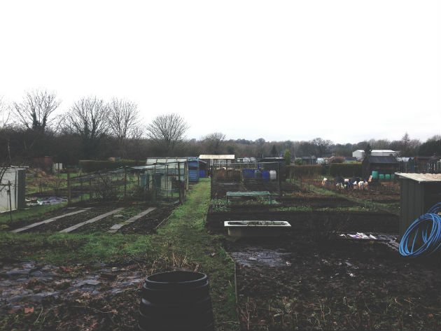The allotments off Liverpool Road