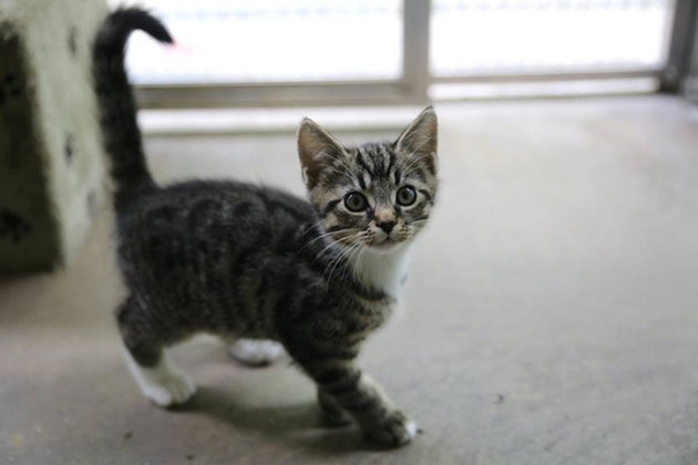 preston rspca in plea for kitten food blog preston. Black Bedroom Furniture Sets. Home Design Ideas