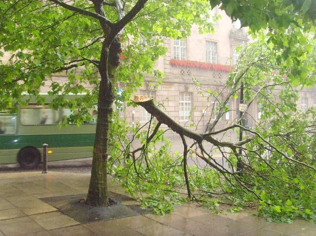 Fallen branch blocks city centre road | Blog Preston