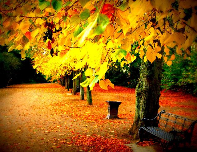 Autumn colours at Avenham Park
