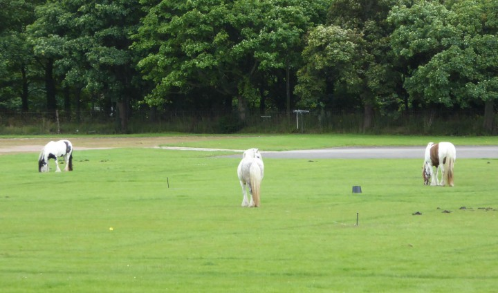 Horses grazing on the Rec