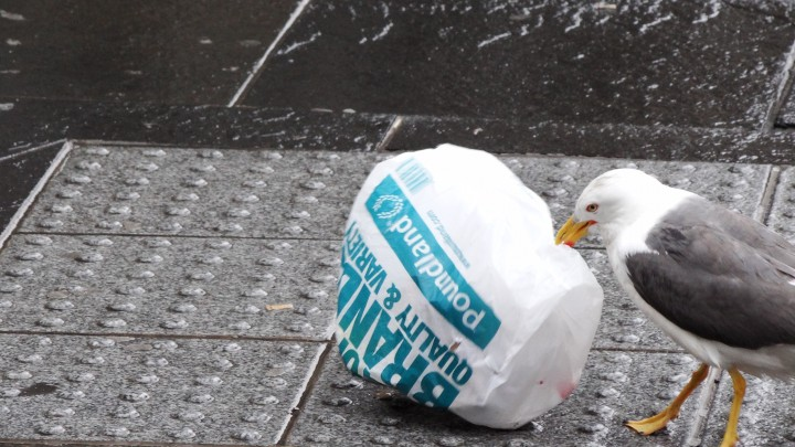 The 5p charge also hopes to combat a litter problem harmful to animals