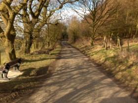 Rambling along a lane near Scorton
