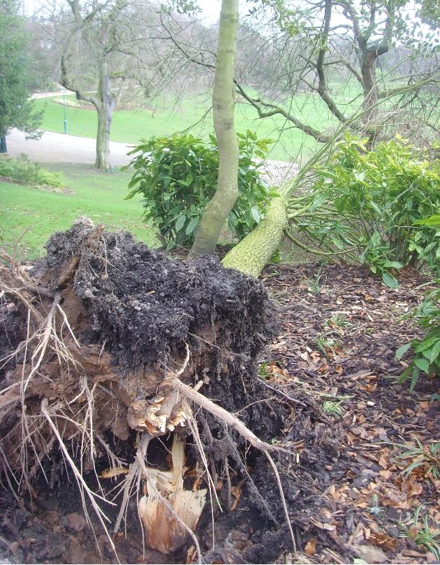 storrm trees