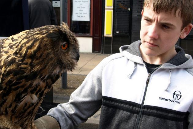 Owl being held