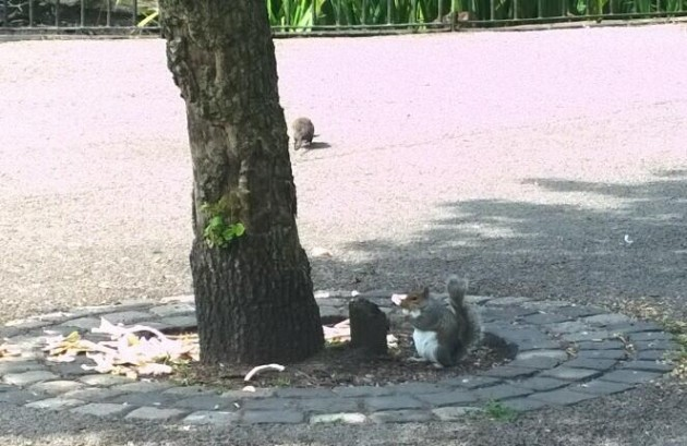 A squirrel holds onto its dinner