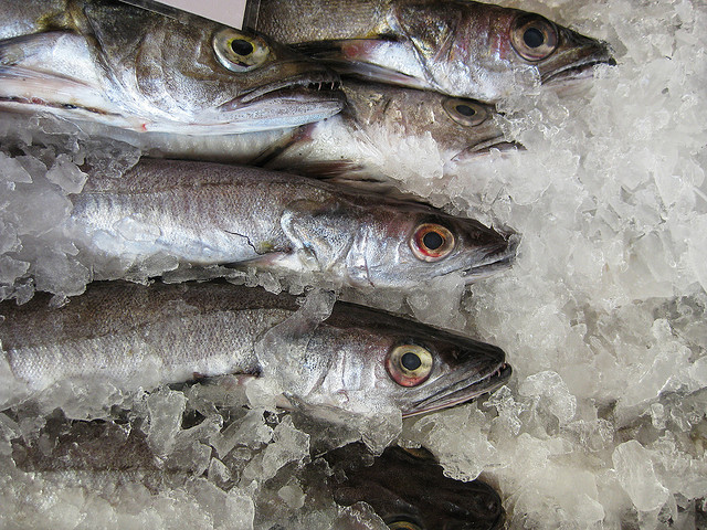Frozen fish are being sold in huge quantities. Pic: Anthony Theobald