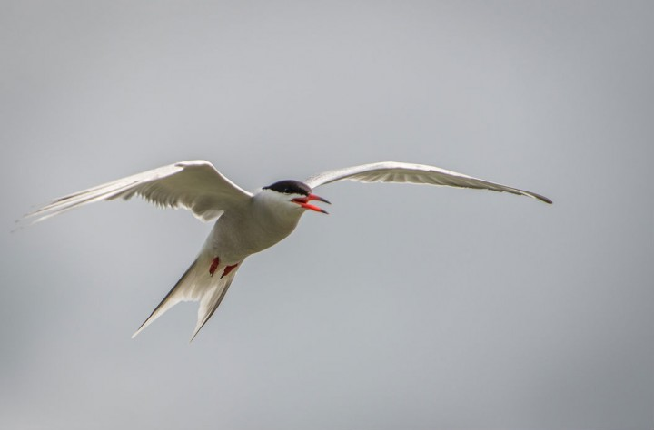 commonterns2