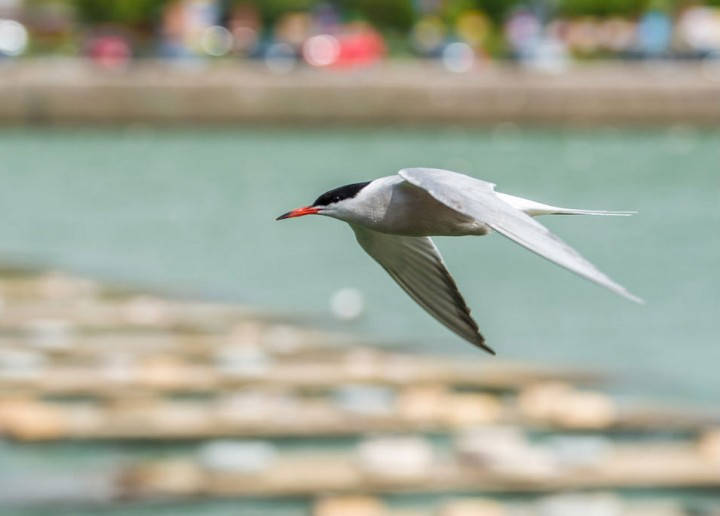 commonterns4