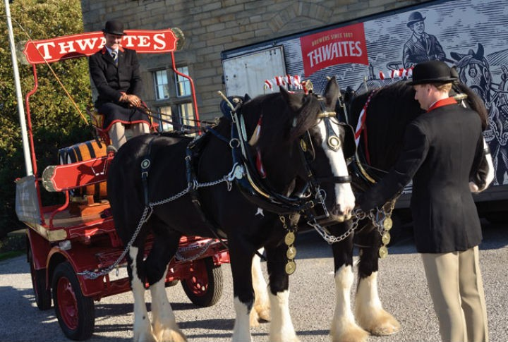 The shires horses will be a mane attraction
