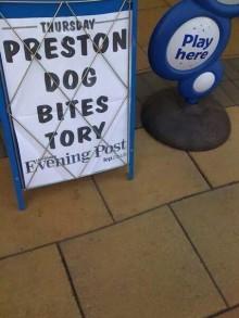 Dog Tory